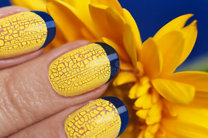 Blue French manicure with yellow craquelure nail Polish close-up. On flower background.Nail art stock photography