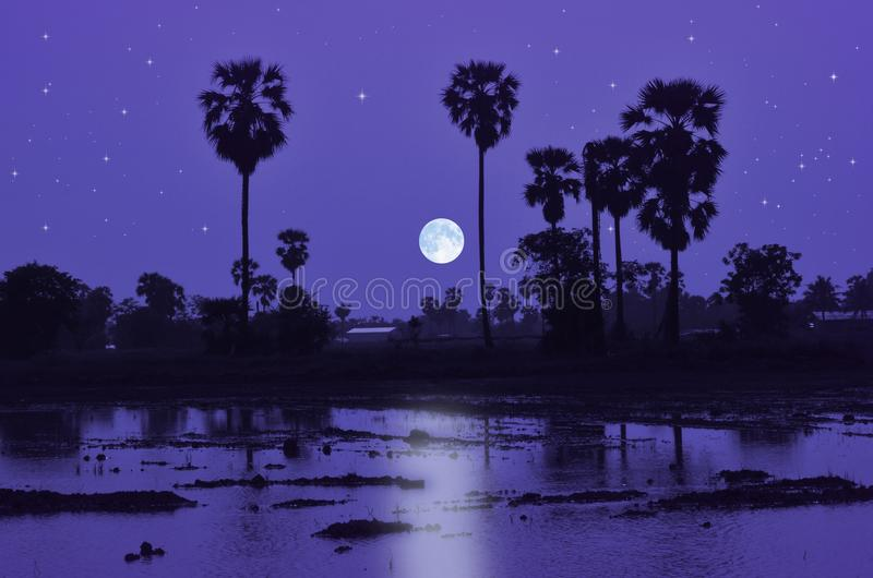 Blue full moon night over the water field. Blue full moon night and palm trees with reflection in the water field royalty free stock images