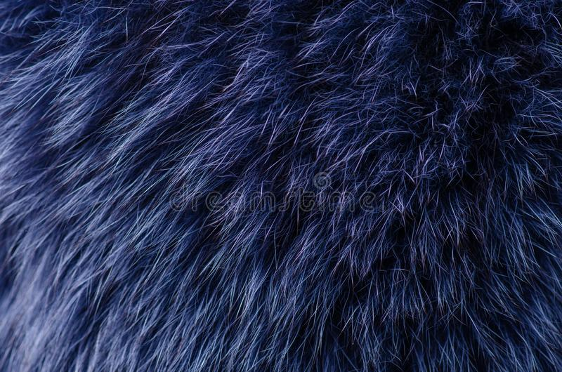 Blue fur macro royalty free stock photography