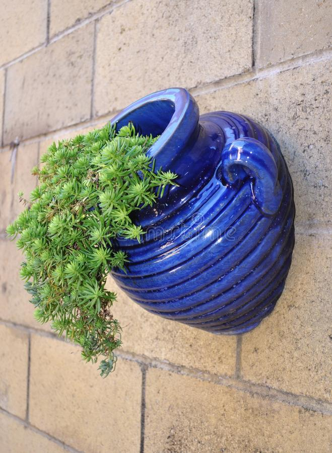 Blue Glazed Pot. With succulent plant on wall stock image