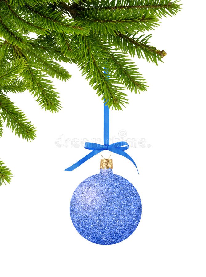 Blue Glitter Christmas decor ball on ribbon on green tree branch. Isolated on white background royalty free stock image