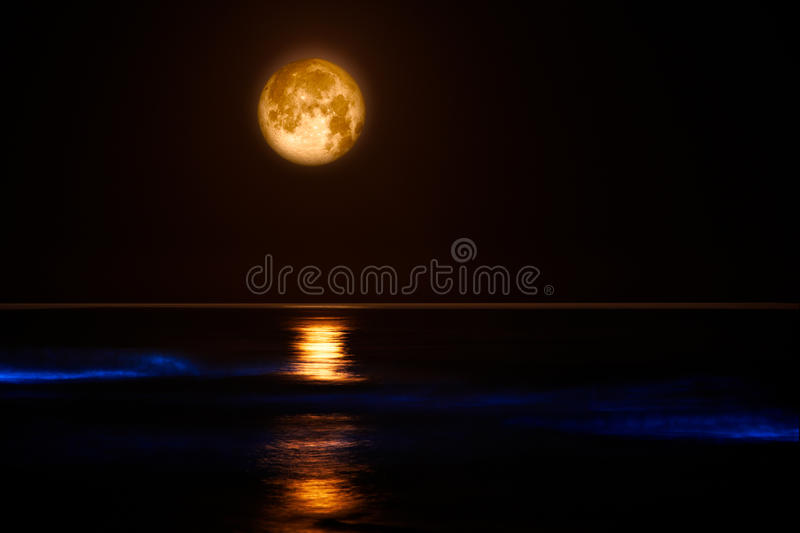 Download Blue Glow On Pacific Coast Waves ~ Red Tide Stock Photography - Image: 21850802