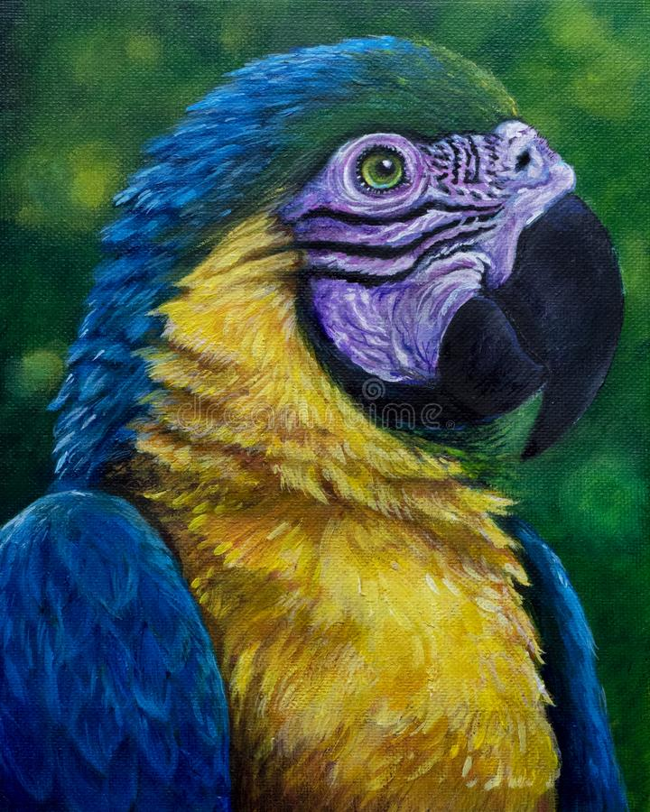 Blue and Gold Macaw acrylic painting stock photos