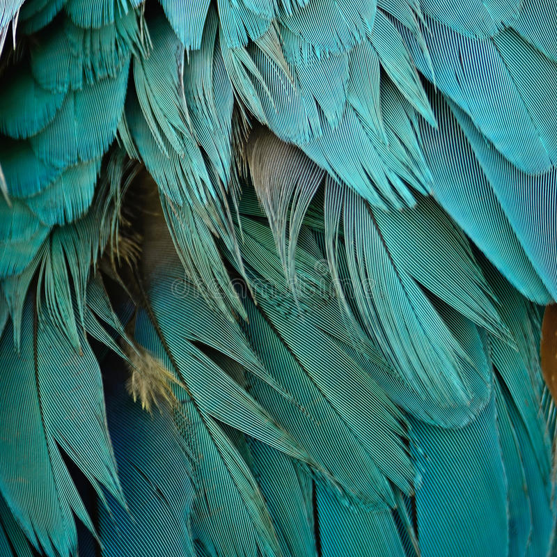 Blue and Gold Macaw feathers. Colorful background texture stock images