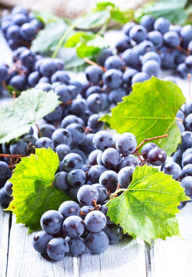 Blue grape stock images