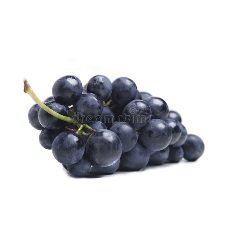 Blue grape cluster stock photos