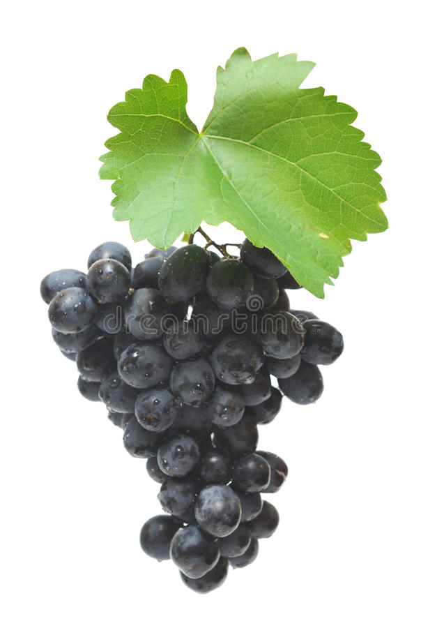 Blue grape cluster with leaves stock image