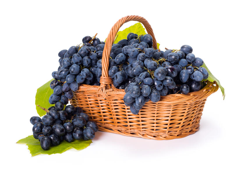 Blue grape clusters in basket royalty free stock photography