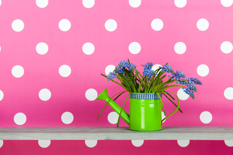 Download Blue Grape Hyacinths On Pink Stock Photo - Image: 38443496