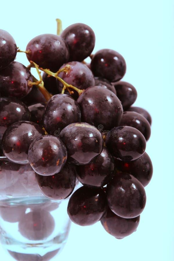 blue grapes obraz royalty free