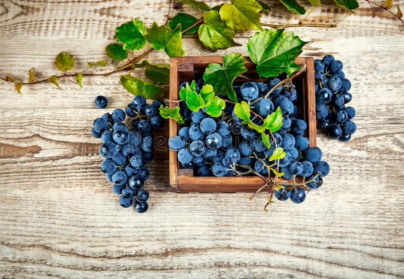 Blue grapes in box with willow stock photography
