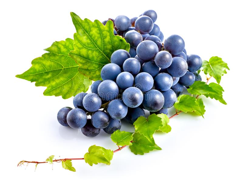 Blue grapes with green leaf healthy eating. Blue grapes with green leaf healthy eating, on white background royalty free stock images