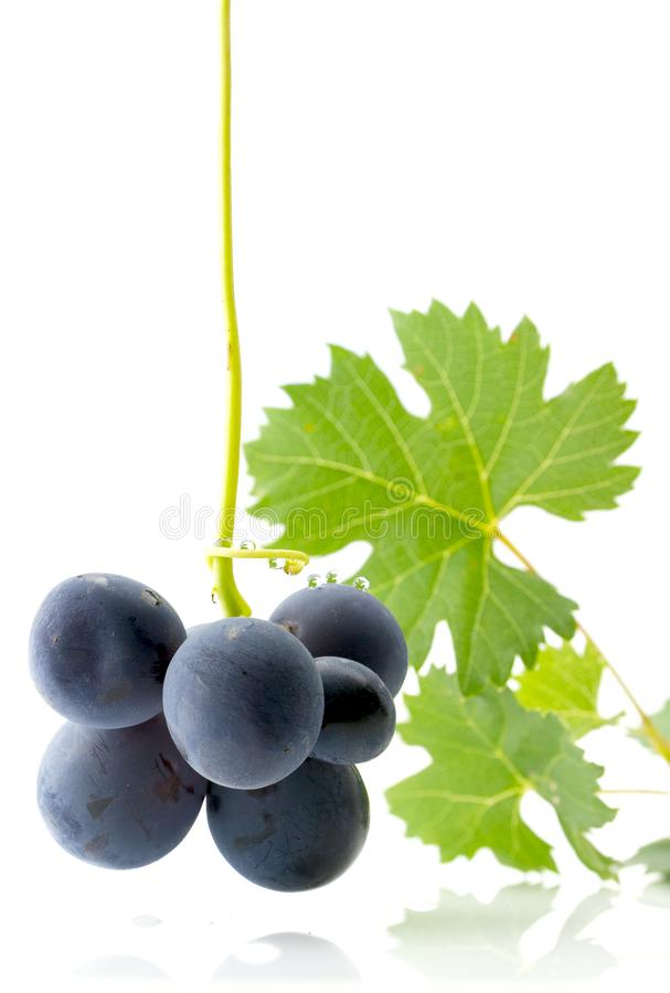 Blue grapes with green leaves stock photography