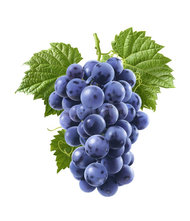 Download Blue Grapes Isolated On White Background. Vertical Composition Stock Photo - Image of beaujolais, food: 111426140