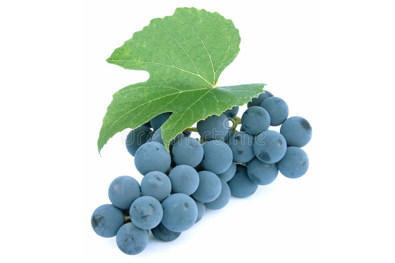 Blue grapes and leaf. Blue wine grapes and leaf royalty free stock image