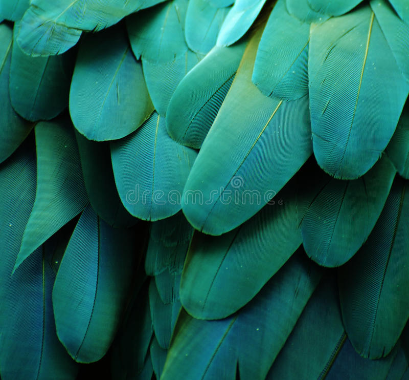 Blue/Green Macaw Feathers. Macro photo of blue/green macaw feathers stock images