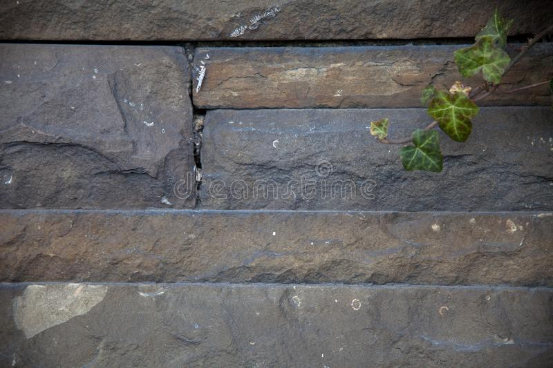 Wall of natural stones with ivy leaves royalty free stock photos