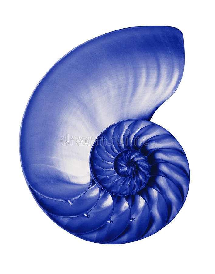 Download Blue Half Nautilis,isolated Stock Photo - Image: 12809834