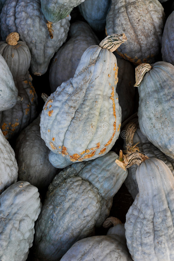 Blue Hubbard Squash. Tight shot of a pile of Blue Hubbard Squash stock images