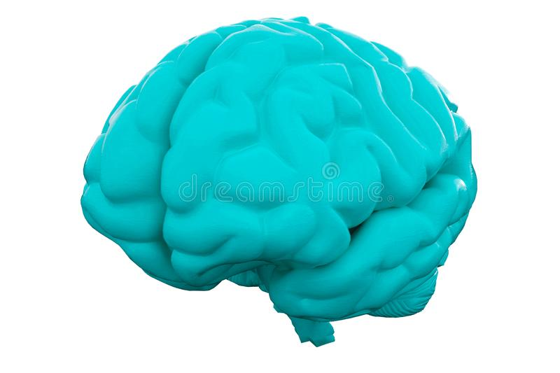 Blue Human brain on white background. Anatomical Model, 3d illustration royalty free illustration