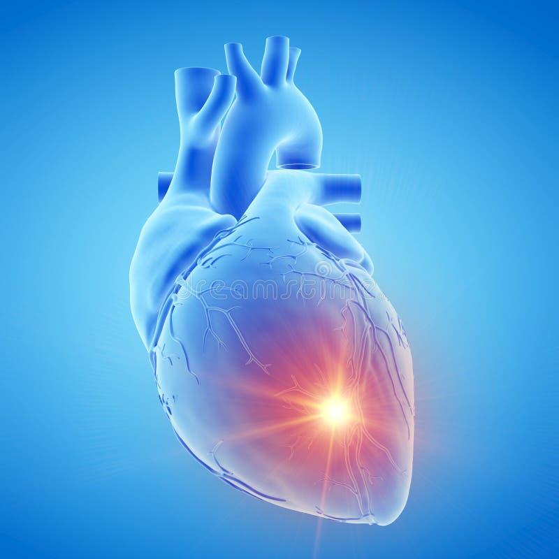 A blue human heart stock illustration