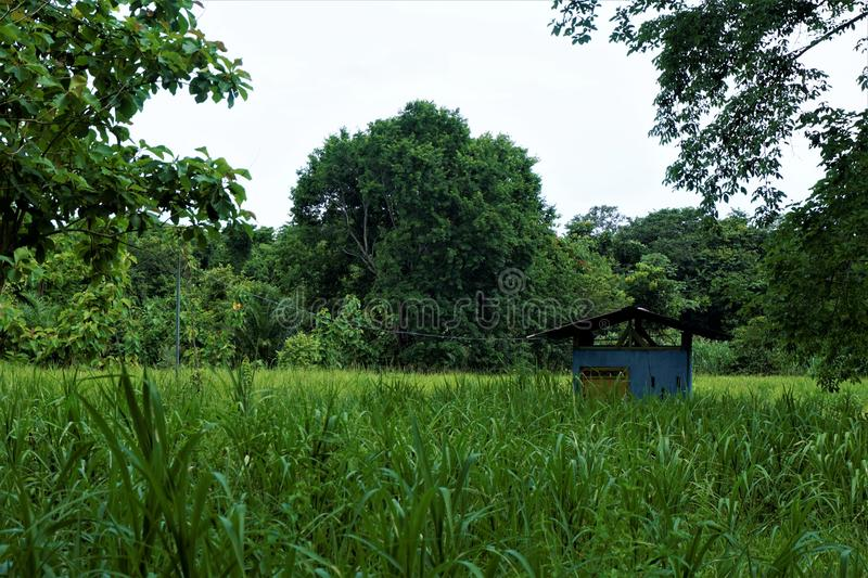 Blue hut in front of the jungle. In Costa Rica stock photos