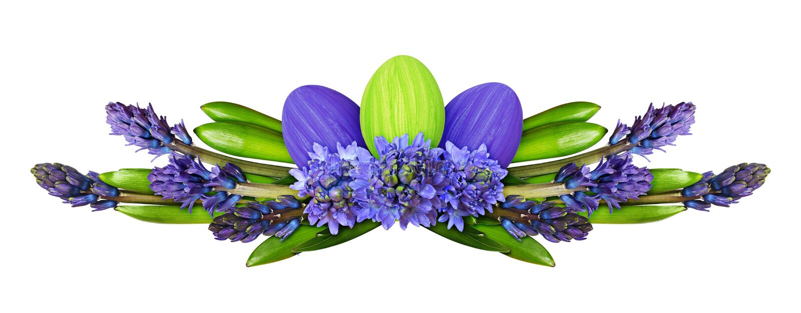 Blue hyacinth flowers and leaves with Easter painted eggs in a line arrangement royalty free stock image
