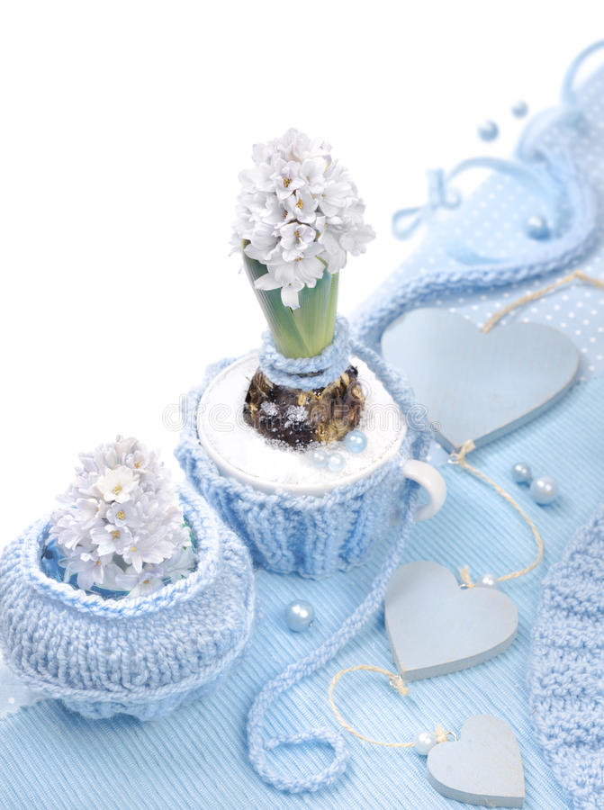 Blue hyacinth with matching decorations on white background, tex stock photo