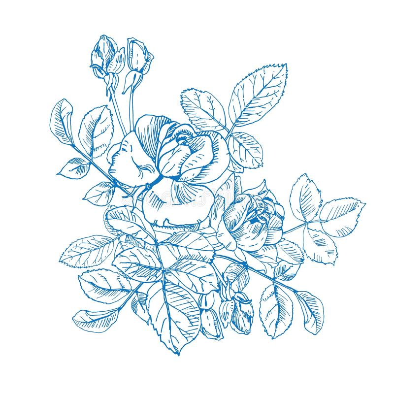 Blue ink wild rose plant with flowers bouquet. Hand drawn tattoo like vector, etch style. Buds, leaves, stem and elegant. Blue ink wild rose composition. Hand vector illustration