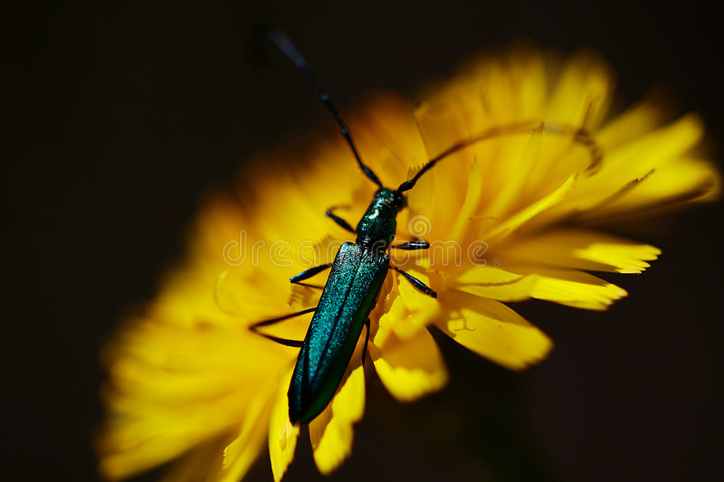 Blue Insect Royalty Free Stock Photos