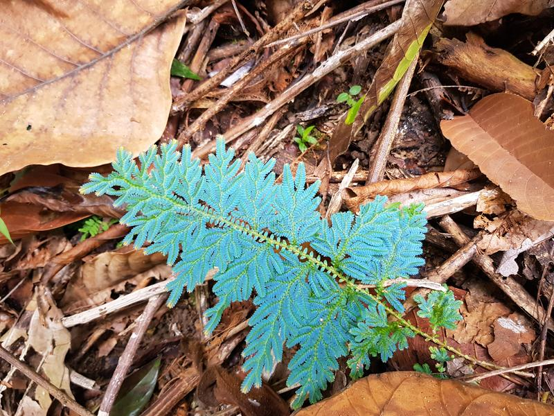 Blue Iridescent fern amongst earthy browns stock photography