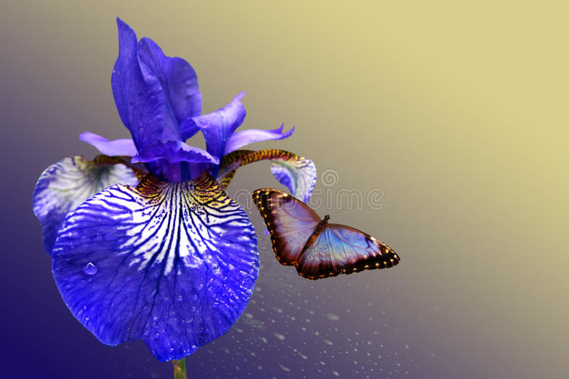 Blue iris and butterfly stock image