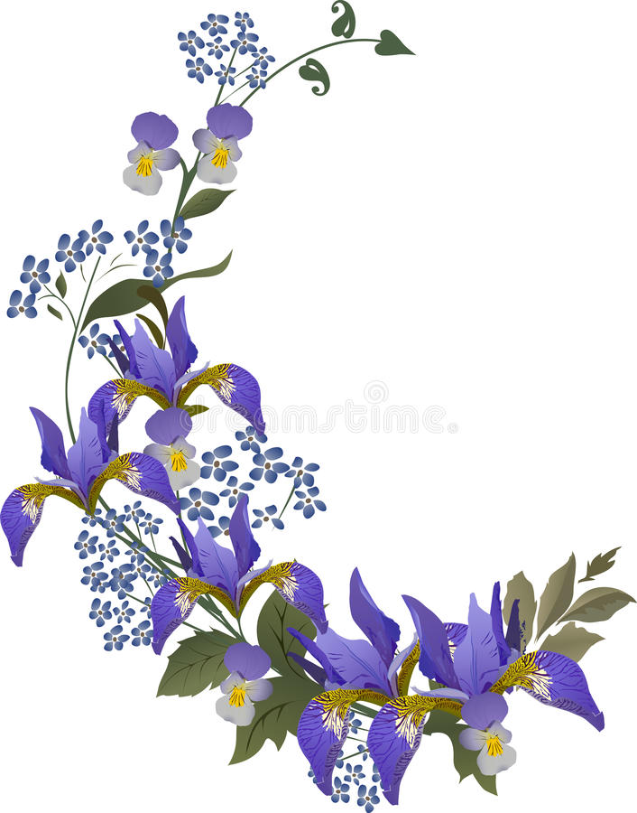 Blue iris flower curl vector illustration