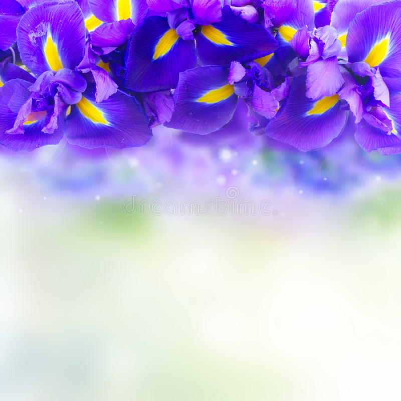 Blue iris flowers. Border with copy space on blue bokeh background stock photo