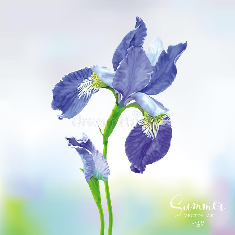Blue Iris vector flower stock illustration