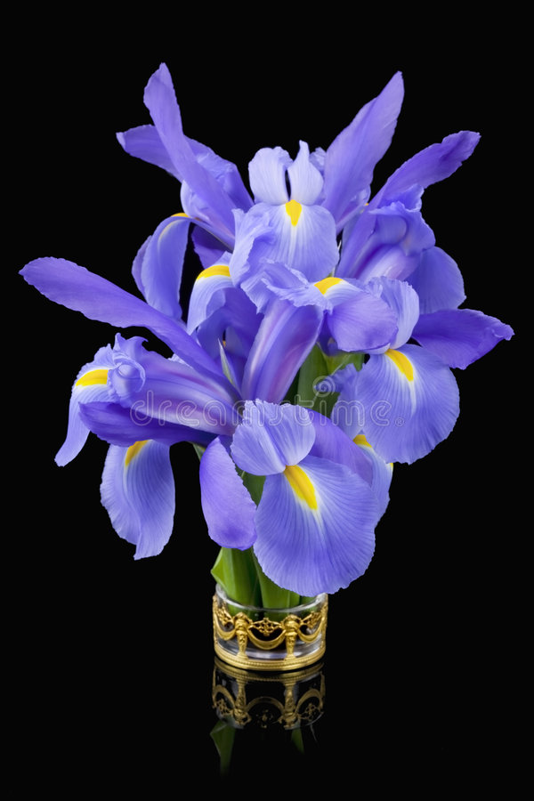 Blue Irises stock photo
