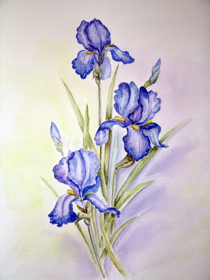 Blue irises painting. My watercolor painting