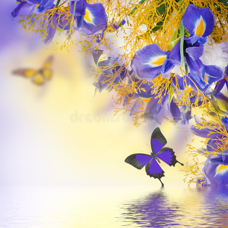 Blue irises, white flowers and butterfly. Bouquet of blue irises, white flowers and butterfly royalty free stock images