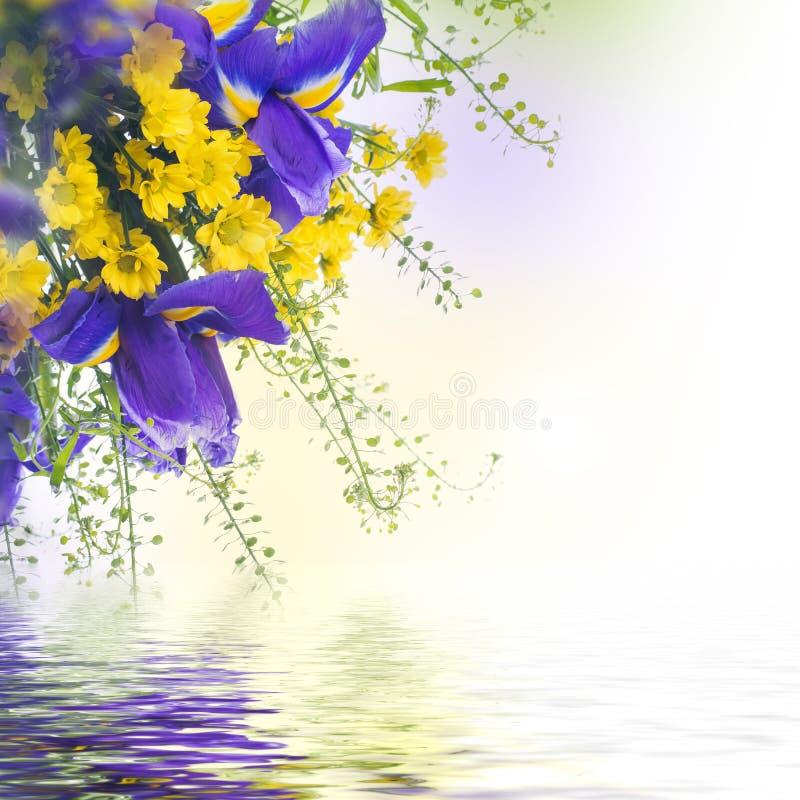 Free Blue Irises With Yellow Daisies Stock Photo - 41660300