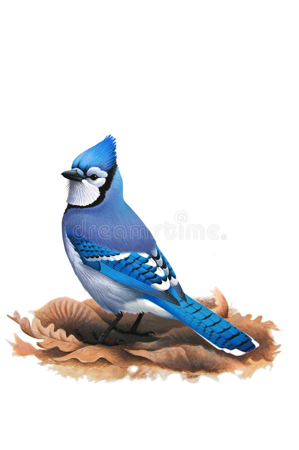 Blue Jay (Cyanocitta cristata) on fallen leaves. Acrylics on watercolor paper royalty free illustration