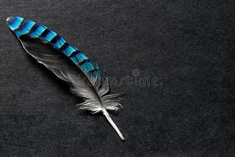 Blue Jay Feather on the Black Matte Background with Free Space stock photo