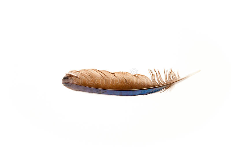 Blue Jay Feather stock photography