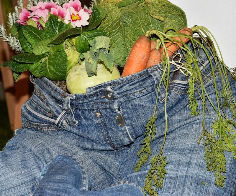 Healthy lifesytyle blue jean stuffed with vegetables. A blue jeans is filled with onions, carrorts, flowers and greens depicts that healthy lifestyle oriented royalty free stock photos