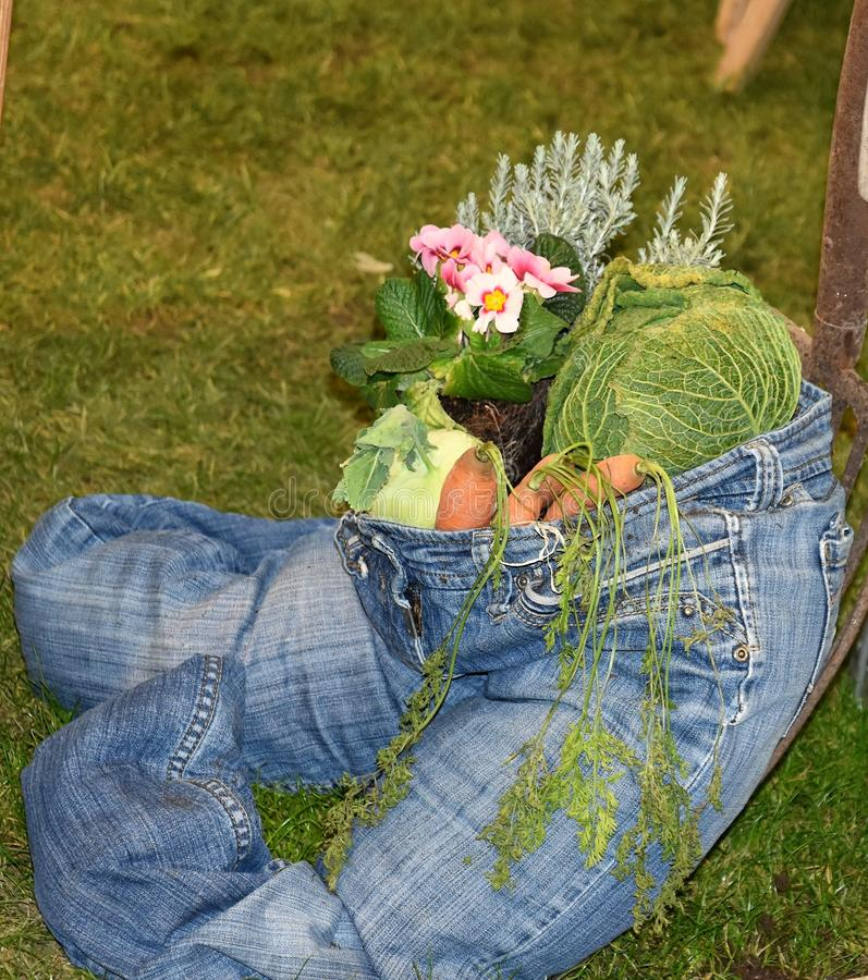 Healthy lifesytyle blue jean stuffed with vegetables. A blue jeans is filled with onions, carrorts, flowers and greens depicts that healthy lifestyle oriented stock images