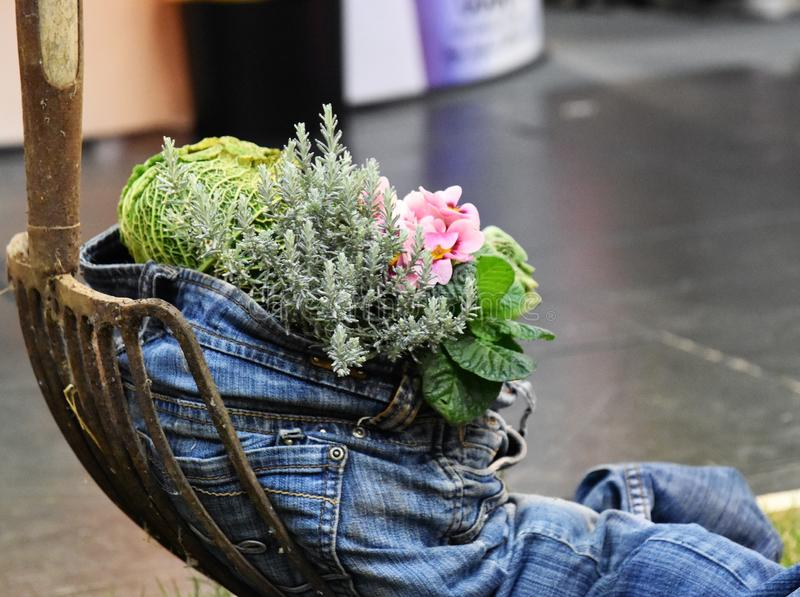 Healthy lifesytyle blue jean stuffed with vegetables. A blue jeans is filled with onions, carrorts, flowers and greens depicts that healthy lifestyle oriented royalty free stock image