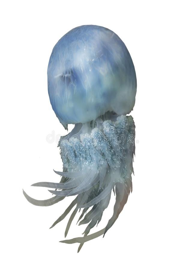Blue jellyfish rhopilema from the sea of Japan stock photos
