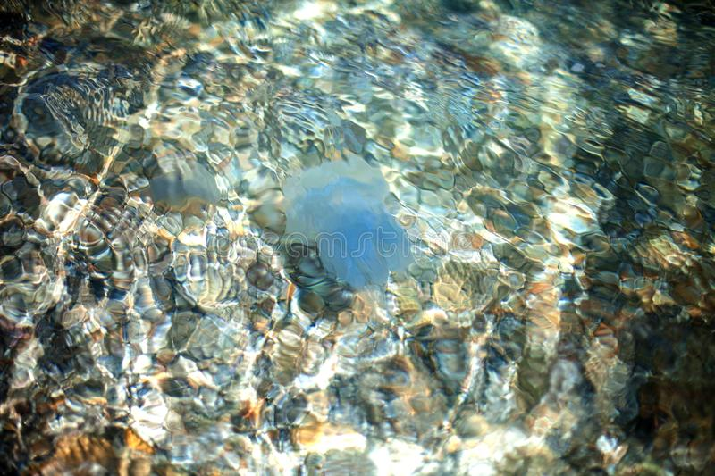 Blue jellyfish under water on the background of the sea floor of pebbles. Travel and holidays in hot countries. Underwater world royalty free stock image