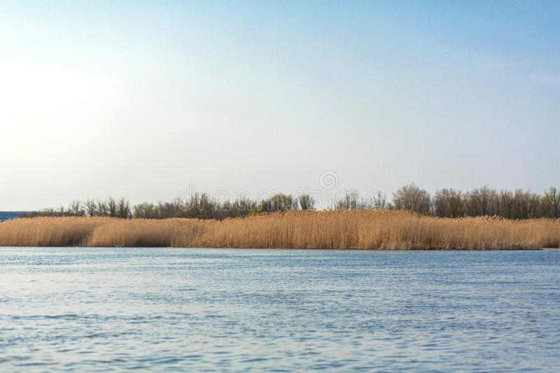 On the blue lake the horizon of golden reed stock image