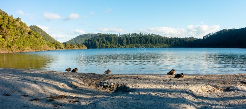 The Blue Lake, Rotorua, New Zealand stock photo