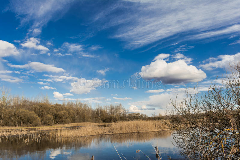 Blue lake, the sky reflects the surface of the water with white clouds, on the horizon a dry reed and the forest grows stock photos